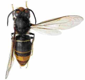 Nhận biết các loài ong và cách sơ cứu khi ong đốt - Bệnh Viện Nhi Đồng Thành Phố